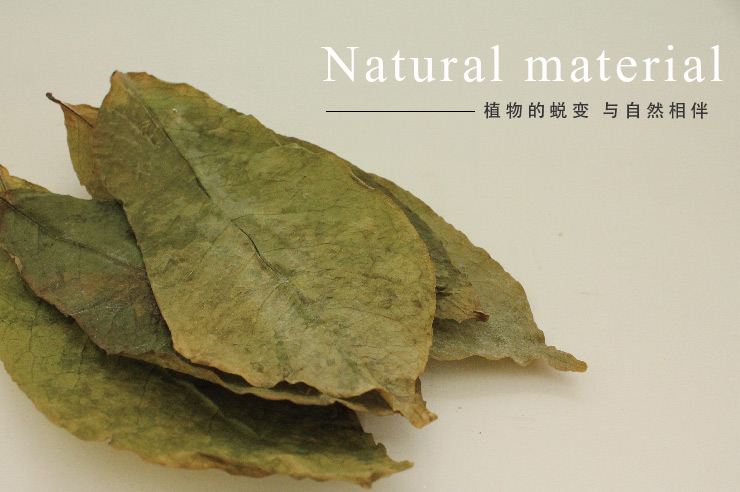 蜕变自植物的绿色环保墙纸